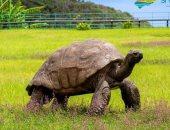 بعمر 189 عاما.. ذكر سلحفاة يصبح أكبر حيوان برى على الأرض