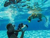 مغامرات الكلاب تحت الماء.. مهارات مصور أمريكى محترف لرصد سلوك الحيوانات أثناء الغطس