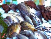 أسعار الأسماك اليوم.. انخفاض ثمن البلطي المزارع