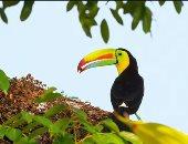 أدغال الغابات.. الحياة الدرامية لبعض الحيوانات والطيور بعدسة مصور ألمانى