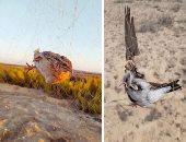 البيئة تخصص رقم واتس للإبلاغ عن الصيد غير المشروع للطيور