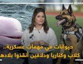 """حيوانات فى مهمات عسكرية.. كلاب وكناريا ودلافين أنقذوا بلادهم """"فيديو"""""""