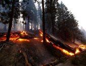 """حرائق الغابات.. شبح الانقراض يفتك بأشجار عمرها 3000 عام فى كاليفورنيا """"ألبوم صور"""""""