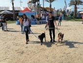 أناكوندا وعقاب وكلاب.. أكبر تجمع للحيوانات على شاطئ بورسعيد.. لايف وصور