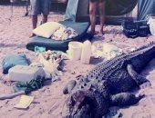 عجوز أسترالية تهاجم تمساحا يزن 300 كيلو لإنقاذ صديق ابنها.. فيديو وصور