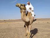 شرم الشيخ تستعد لانطلاقة موسم سباقات الهجن الجديد بمشاركة 1500 هجان الشهر المقبل