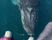 مشهد مذهل لـ حوت أحدب يرحب بسياح خلال جولة بحرية فى أستراليا.. فيديو