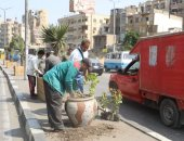 نظافة القاهرة تزين ميدان السيدة زينب وتزرع الأشجار بالشوارع.. صور