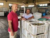 أرض مباركة.. مراحل إنتاج زيت الزيتون من مزرعة بشمال سيناء تعود لعام 1986