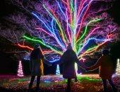 العزف على أضواء الليزر.. شوارع بريطانيا تتجمل استعدادا لاحتفالات عيد الميلاد