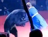 """دب روسى يهجم على مدربته الحامل أثناء العرض.. لن تصدق السبب """"فيديو"""""""