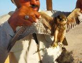 البيئة تبدأ حملة لمحاربة الصيد غير المشروع للطيور المهاجرة بالبحر الأحمر