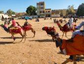 """بالأحصنة والجمال.. أهالى الأقصر يحتفلون بدورة """"صباحية المولد النبوى"""".. لايف وصور"""