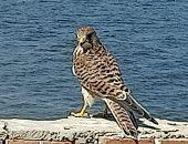 4 حملات تفتيشية لمحاربة الصيد غير المشروع للطيور المهاجرة بالفيوم.. صور