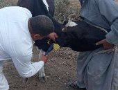 قافلة بيطرية بالمجان فى قرية نافع بالشرقية ضمن مبادرة حياة كريمة