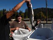 إنقاذ الأسماك.. جفاف بحيرات كاليفورنيا يهدد باختفاء سمك السلمون
