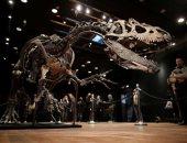 """الديناصورات نجوم المزادات العالمية رغم انقراضها.. بيع أكبر ديناصور مقابل 6.6 مليون يورو فى باريس.. عرض هيكل عظمى لديناصور"""" ثيروبودا"""" بـ 2.2 مليون دولار ببرج إيفل.. وسعر""""ألوصور"""" يصل إلى 3 ملايين يورو"""