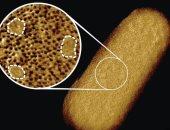 علماء بريطانيون يلتقطون أوضح صورة على الإطلاق للبكتيريا الحية