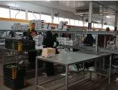 داخل محطة تصدير المانجا.. هنا النوابارية تحول المانجا المصرية لمنتج عالمى