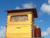 بالفيديو.. خلية نحل ذكية للحصول على العسل بضغطة زر