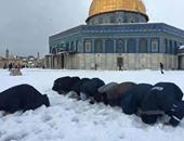 أيمن ماهر يكتب:  يا فلسطين