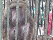 """صحافة المواطن:""""الجوع كافر"""".. حيوانات تلتهم قدمى""""قرد"""" بحديقة حيوان الزقازيق"""