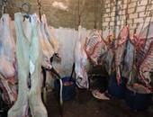 تحرير 14 محضرا لجزارين لذبحهم المواشى خارج المجازر فى بنى سويف