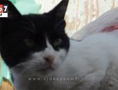 """بالفيديو..قطط تثير الرعب بين أهالى عزبة خير الله: """"الجن بينتقم مننا"""""""