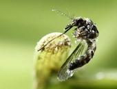 وداعاً فيروس زيكا.. علماء بلجيكيون ينجحون فى ابتكار مصل ضد الفيروس