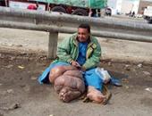 شخص مصاب بداء الفيل يفترش طرقات بنى سويف.. وقارئ يطالب المسئولين بعلاجه