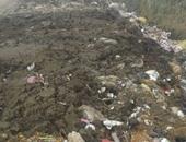شكوى من انتشار  القمامة بباسوس فى القناطر الخيرية