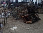 النيابة تطلب التقرير الجنائى والتحريات حول حريق جراج سيارات فى البدرشين