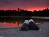 بالصور.. صداقة قوية تجمع بين كلبتين تفعلان كل شىء معا