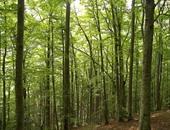 الفاو: أفريقيا تفقد 3 ملايين هكتار من الغابات سنوياً