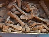 بدء البحث عن حفرة بالمكسيك ناجمة عن نيزك أدى لانقراض الديناصورات