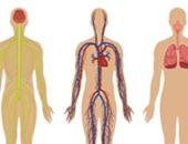 أطعمة تمدك بالحديد وفيتامين b6 المهمين لضخ الهيموجلوبين فى الدم