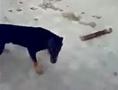 مستخدمو فيس بوك يعيدون نشر مقطع فيديو إلقاء كلب من سطح بناية سكنية
