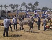 اليوم.. انطلاق مهرجان الخيول العربية الـ21 بمحطة الزهراء