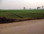 وكيل زراعة كفر الشيخ يوضح خطورة تجريف الأراضى وفقد التربة خصوبتها