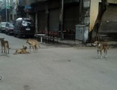 شكوى من انتشار الكلاب الضالة بشارع مسجد الرحمن بالجيزة