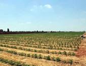 الصين تحث الولايات المتحدة على الوفاء بتعهداتها لتسهيل التعاون الزراعي
