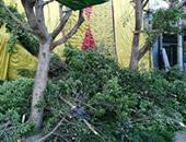 صحافة المواطن: محل شهير يقطع الأشجار من أجل اللافتة الخاصة به فى الجيزة