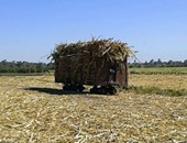وزير الزراعة: نسعى لتعميم تجربة زراعة القصب بالشتلات والأصناف الجديدة