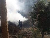 صحافة المواطن: قارئ يشكو من دخان ناتج عن حرق مخلفات كلية زراعة القاهرة