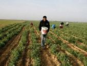 ربيع أبو لطيعة يطالب بتفعيل الزراعات التعاقدية والاهتمام بمراكز البحوث