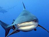 مجلس النواب يتواصل مع المحافظين لبحث ظاهرة انتشار أسماك القروش