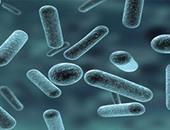 6 أنواع من الجراثيم تختبئ فى منزلك رغم التعقيم والحرص على النظافة