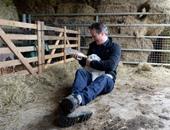 ديفيد كاميرون ينشر صورًا له وهو يُرضع شاة صغيرة بإحدى المزارع