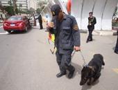 تاريخ الكلاب البوليسية فى مصر.. قصة 11 كلبا ولدت بالسراى الملكى
