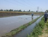 توسعات زراعة الأرز المخالفة تتسبب فى انخفاض نصيب الفرد من المياه 103 متر مكعب.. زيادة المزروع لـ 2.5 مليون فدان بزيادة الضعف عن المقررة رسميا..نادر نور الدين: ضرورة مصارحة المواطنين بوجود أزمة مائية